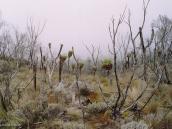Фото из тура в Танзанию в 2003 году. Сенеции и лобелии - эндемики Килиманджаро.