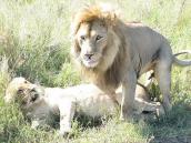 Фото из тура в Танзанию в 2008 году. И так происходит до 300 раз в день!