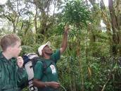 Фото из тура в Танзанию в 2008 году. Гид показывает на особенности роста лиан, Килиманджаро.