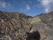 Фото из тура в Танзанию в 2009 году. Лишайник покрывает скалы из лавовых пород на плато Шира.