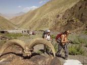 Фото из тура в Индию в 2005 году. Не всякий баран доходит до середины перевала.