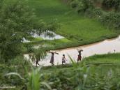 Фото из тура на Мадагаскар в 2007 году. Жители идут к месту сбора риса