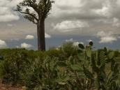 Фото из тура на Мадагаскар в 2007 году. Баобаб в деревеньке неподалеку от Mahaboboka