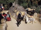 Фото из тура в Непал в 2004 году. Стена Мани на тропе к Намче-Базару.