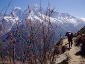 Фото из тура в Непал в 2004 году. Носиьщик на тропе от Намче-Базара к Монгу. На заднем плане г. Кантега и г. Тамсерку.