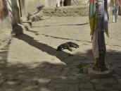 Фото из тура в Непал в 2012 году. Медитирующие собаки в Ло-Гекаре.