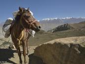 """Фото из тура в Непал в 2012 году. Вьючная лошадь с """"человеческим лицом"""" на гималайском перевале."""