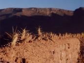 Фото из тура в Перу в 2004 году. Вместо колючей проволоки в Перу на изгородях высаживают кактусы.