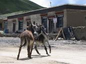Фото из тура Непал-Тибет в 2004 году. Во время привала по пути к Кайласу