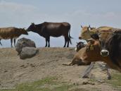 Фото из тура в Турцию в 2012 году. Стада курдов. Все животные промаркированы, у каждой семьи свои наделы.