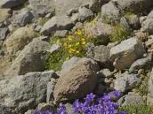 Фото из тура в Турцию в 2012 году.  А можно просто помедитировать среди цветов у ручья...