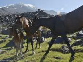 Фото из тура в Турцию в 2012 году.  И снова ласковое солнечное утро, не предвещающее тяжелой работы. Лошадиная семья приветствует друг друга, перед тем как встать под ярмо.
