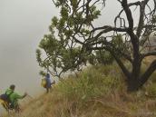 Фото из тура в ЮАР в 2013 году. Первые настоящие деревья разбросаны далеко друг от друга.