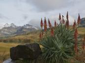 Фото из тура в ЮАР в 2013 году.  Прямо перед моим окном цветущий куст алоэ. Горы вдали - это, слева направо, Внутренний Рог, Внешний Рог и, далее, маленькая вершинка - вчерашний Колокол.