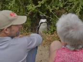 Фото из тура в ЮАР в 2013 году. Как видите, пингвины очень любопытны, это пересиливает в них страх.