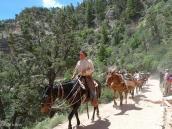 Фото из тура в США в мае-июне 2010 года. Трек на лошадях по Гранд Каньону, Аризона.