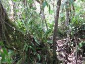 Фото из тура в Венесуэлу в феврале-марте 2012. Так выглядит тропа в самом начале.