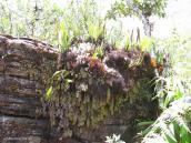 Фото из тура в Венесуэлу в феврале-марте 2012. Внизу, вотличие от вершины, растительность довольно разнообразная.