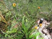 """Фото из тура в Венесуэлу в феврале-марте 2012. Местами """"тропа"""" - это просто каменные нагромождения."""