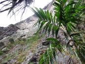 Фото из тура в Венесуэлу в феврале-марте 2012. Отвесная стена высотой более километра уходит вверх.