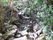 """Фото из тура в Венесуэлу в феврале-марте 2012. Вот так выглядит """"тропа"""" на Рорайму. Это тот самый пандус, скрытый растительностью. По нему поднимаются все восходители со стороны Венесуэлы."""