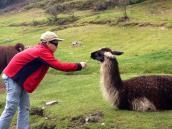 путешествие в Перу и Боливию, подкармливаем лам