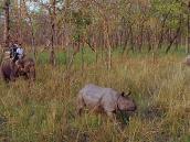 Носорога обложили
