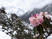 треккинг Гокио-Эверест, тур в Непал, путешествие в Гималаи